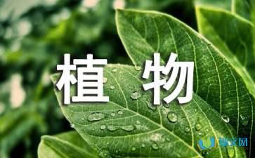 关于观察柳树的植物日记赏析