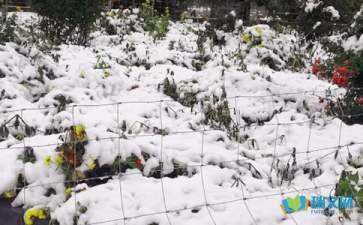关于描写下雪的优美段落摘抄赏析
