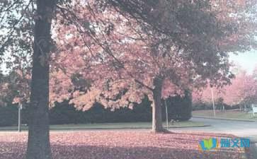 关于秋季的诗句及成语学习
