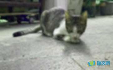 关于历年小升初满分作文:我和小猫赏析