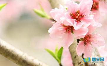 关于谜底是桃花的谜语是什么全部