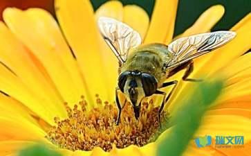 关于蜜蜂的谜语全部
