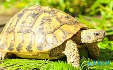 关于谜底是乌龟的谜语有哪些全部