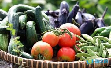 关于儿童启蒙蔬菜类儿童谜语及答案全部