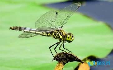关于蜻蜓点水同义词大全