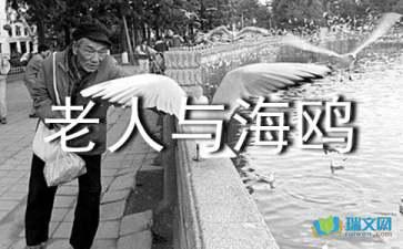 关于老人与海鸥教学课件学习