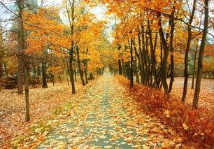关于校园之秋的诗句大全