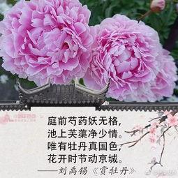 关于春花的两组诗句大全