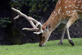 关于少女和鹿的诗句大全