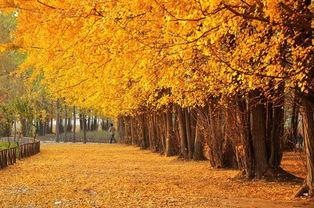 关于描写深秋初冬季节的诗句大全