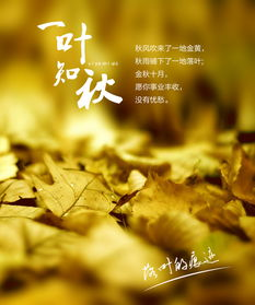 关于秋天落叶的爱情诗句大全