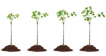 关于小树的诗句及意思大全