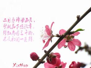 关于桃花的诗句的诗句大全