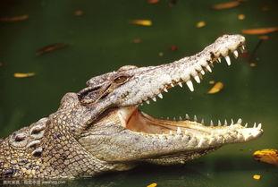 关于鳄鱼哭的诗句大全