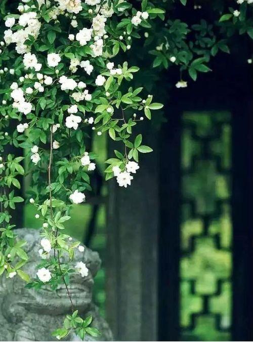 关于珍惜春天珍惜时光的诗句大全