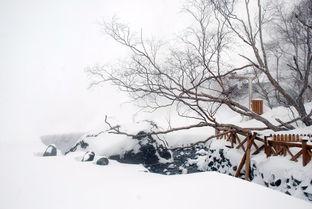关于雪的诗句诗大全