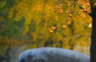 关于秋天愁绪的诗句大全