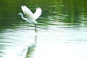 关于白鹭有山有水有鱼的诗句大全